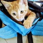 リュックに入る猫の画像