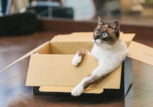 段ボールに入る猫の画像