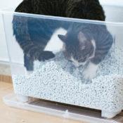 猫砂をかく猫の画像