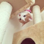 キャットタワーに乗る猫の画像