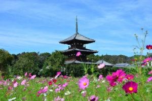 有形文化財・法隆寺の画像